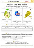 Früchte und ihre Samen