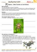 Spinnen - flinke Tierchen auf acht Beinen!