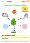 Photosynthese - Kraftwerk der Pflanzen