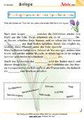 Frühlingsblumen und ihre Speicherorgane