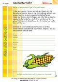 Mais und Getreide