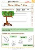 Bäume, Blätter, Früchte