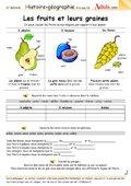 Les fruits et leurs graines