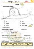 L'escargot - Dans tous ses détails !