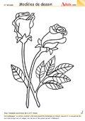 Modèle de dessin - Bouquet de roses