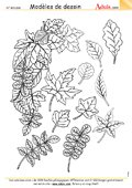 Modèles de dessin : feuilles d'automne