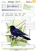 Caractéristiques d'un oiseau