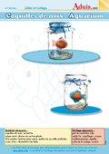 Coquilles de noix - Aquarium