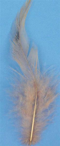 Decoratieve veren - 15 st., natuurlijk bruin