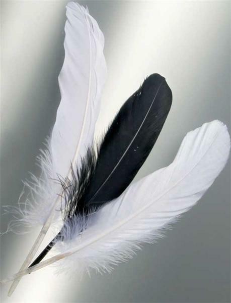 Plumes d'Indiens - 15 pces, noir/blanc
