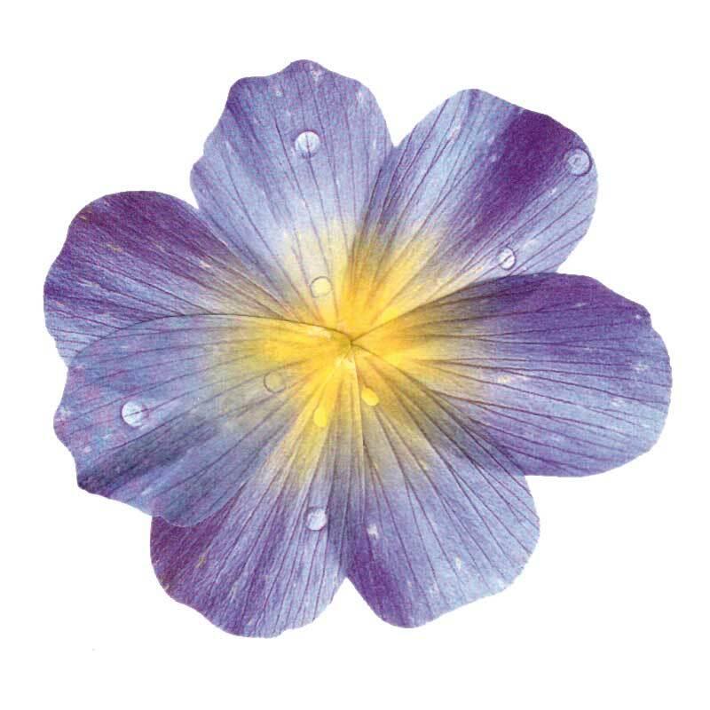 Stickers Washi - fleurs bleues