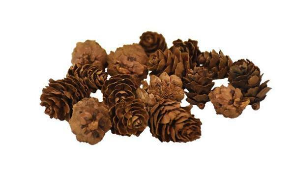 Mélange de cônes - 170 g, env. 1,5 - 3 cm