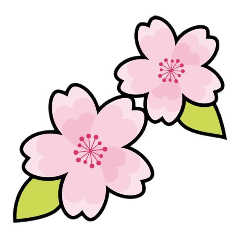 Seifenduftöl - 10 ml, Kirschblüte