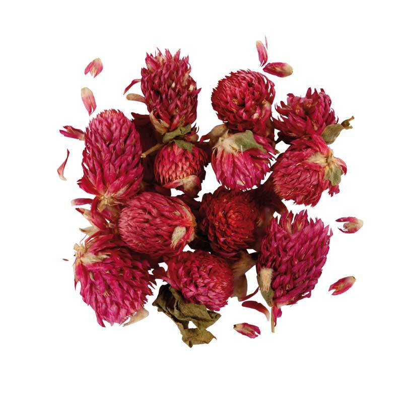 Trockenblumen - Kleeblüten, ca. 17 g