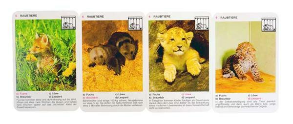 Kwartet baby dieren