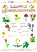 Pflanzen - Blätter, Blumen, Natur