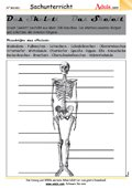 Der Mensch - unser Körper